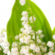 Macro lily of the valley — Stock Photo