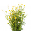 Medical chamomile — Stock Photo #25204335