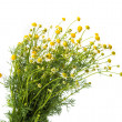 Medical chamomile — Stock Photo #25204453