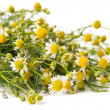 Medical chamomile — Stock Photo #25204749