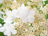 Small white flowers — Stock Photo
