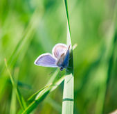 Butterfly on the grass — Stok fotoğraf