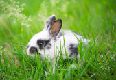 Little rabbit — Stock Photo
