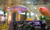 Fish swimming — Foto de Stock