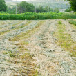 Rows of freshly mown hay — Stock Photo #27450153