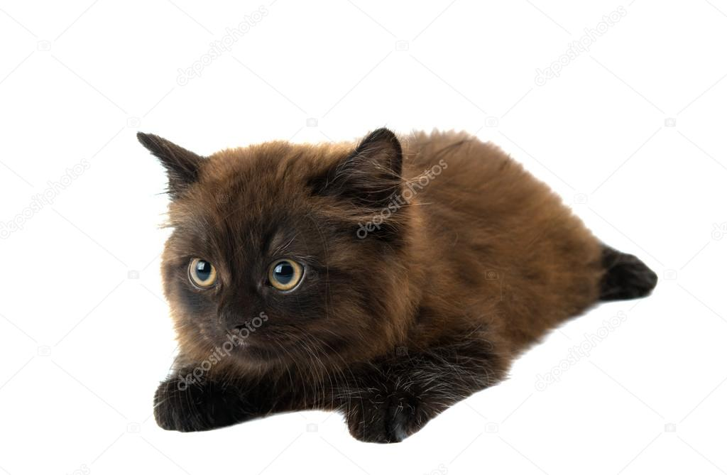 壁纸 动物 猫 猫咪 小猫 桌面 1024_669