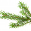 Pine branch — Stock Photo #27666303
