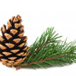 Pine branch — Stock Photo #27666495