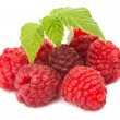 Raspberry isolated — Stock Photo #27889959