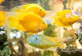 魚 — ストック写真