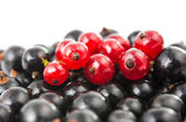 Black and red currant isolated — Stock Photo