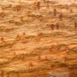 Wooden texture — Stock Photo #28903271