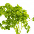 Parsley isolated — Foto Stock