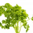 Parsley isolated — 图库照片
