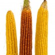 Corn isolated — Stock Photo #30301897