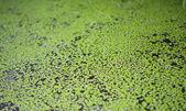 Background of algae — Stock Photo