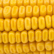 Yellow corn texture — Stock Photo