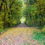 Höstlandskap. Park i höst. skogen i höst — Stockfoto