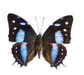Beautiful Butterfly isolated — Fotografia Stock