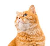 Kat geïsoleerd — Stockfoto