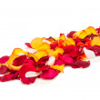 Stock Photo: Rose petals isolated