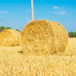 Harvested field with straw bales — Foto Stock