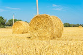 Harvested field with straw bales — Stock Photo