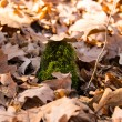 Stump with moss in a forest — Stock Photo