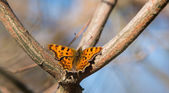 Butterfly on the tree in late autumn — Stock Photo