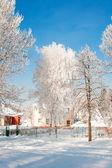Stromy se sněhem v zimě parku — Stock fotografie