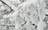 Trees with snow in winter park — Stock Photo