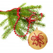 Fir branch isolated — Stockfoto