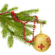 Fir branch isolated — Stock Photo #36201161