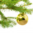 Fir branch isolated — Stock Photo