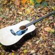 Guitar in autumn leaves — Stock Photo #36210005