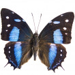 Beautiful Butterfly isolated — Stock Photo