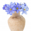Hepaticnobilis — Stock Photo #38074301