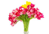 Tulips in a vase isolated — Stock Photo