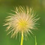 Постер, плакат: Dream flower blooming