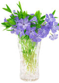 Bouquet of flowers of periwinkle isolated — Stock Photo
