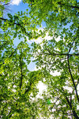 Spring landscape of trees  — Stock Photo