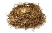 Nest with eggs  — Stock Photo