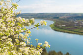 Spring river landscape — Stock Photo