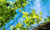 Spring landscape of trees against the sky — Stock Photo