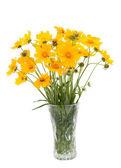 żółty kwiat — Zdjęcie stockowe