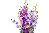 Wild flowers isolated  — Stock Photo