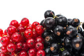 Black and red currant — Stock Photo