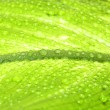 Close-up photo of a green leaf — Stock Photo #1639683