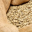 Raw coffee beans - Stock Photo