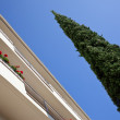 Hotel and a thuja — Stock Photo
